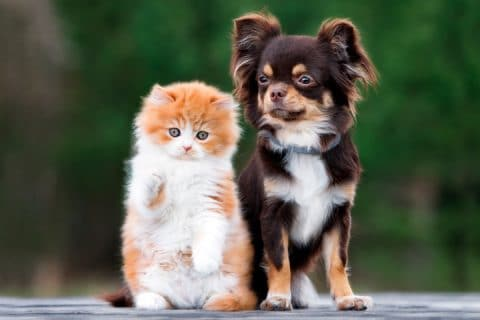Tips to Make Your Home Pet-Friendly
