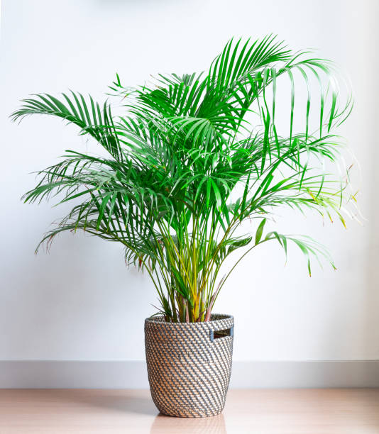 These 5 Plants Can Bring Good Luck Into Your Home in 2021